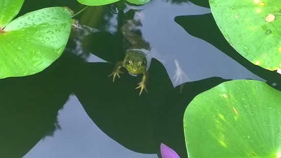Orrtanna, PA: Frog leaped past me and into pond in front of elephants. It added to adventure in outdoor garden