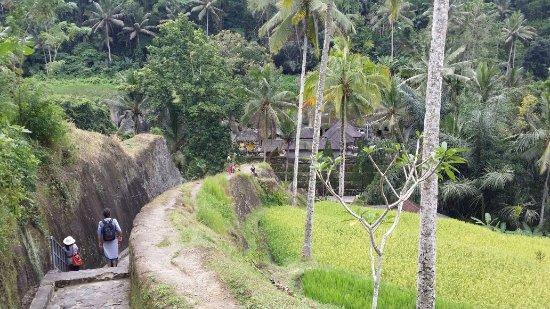 Tulamben, Indonésia: IMG-20170724-WA0000_large.jpg