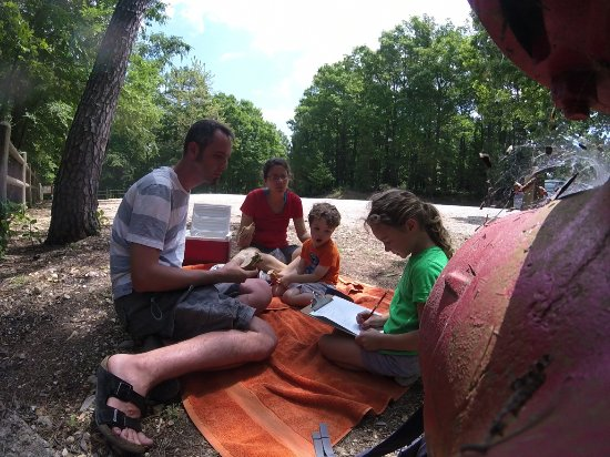 Rogers, AR: picnic time