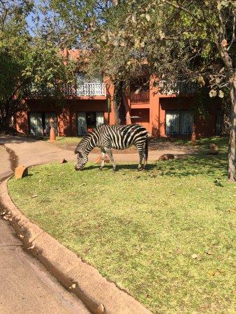 زامبيزي سن: AVANI Victoria Falls Resort