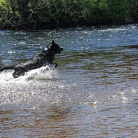 Castletown House: Great swimming spots for dogs