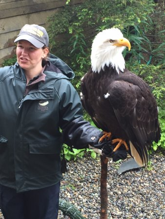 Alaska Rainforest Sanctuary: Amazing. So big and so close!