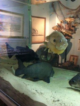 Point Pleasant River Museum: Aquarium at River Museum.