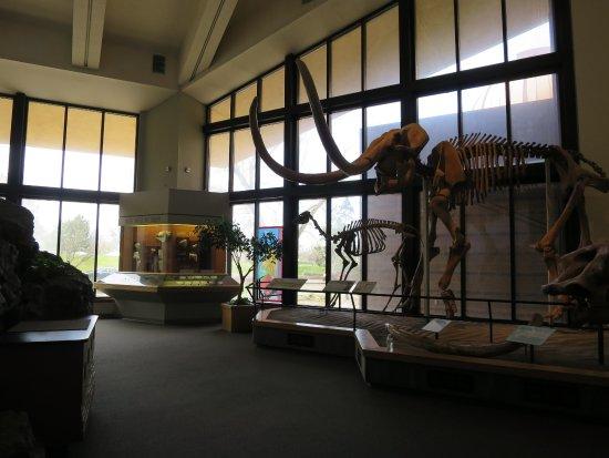 Explora Science Center and Children's Museum of Albuquerque: Dinosaur skeletons