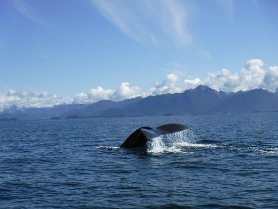 Sitka, AK: Post-breach by our raft.