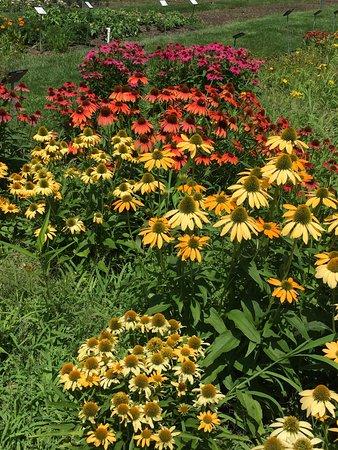 Wellesley, MA: Flowers at Elm Bank