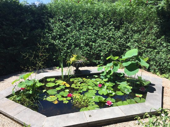 Beverly, MA: Waterlilies in the Long Hill Gardens