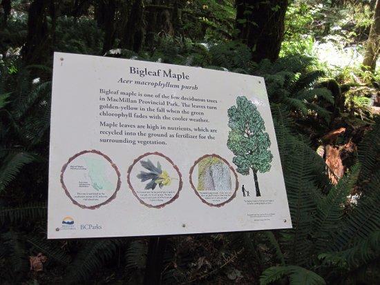 พอร์ตอัลเบอร์นี, แคนาดา: big maple sign