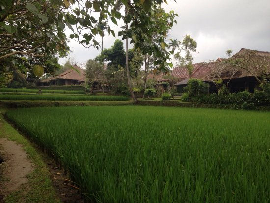 Ananda Cottages: photo1.jpg