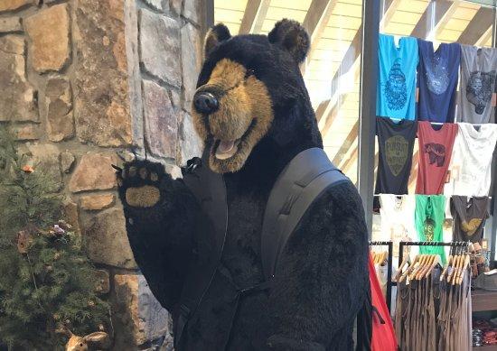"NOC Gatlinburg: Say ""Hi"" to the bear at NOC"