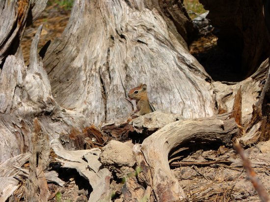 La Pine, OR: Lots of tiny ground squirels