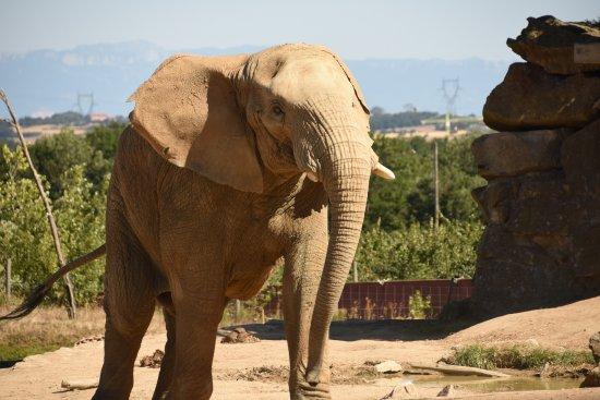 Ardeche, France: entrainement des Elephants