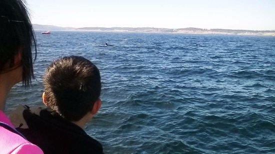 Edmonds, WA: A mother and her child watching orcas in the water