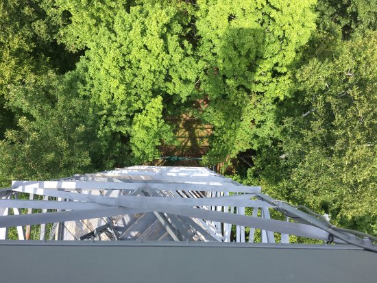 Grand Rapids, MN: Looking down from top of fire tower.