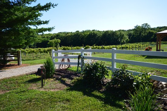 Excelsior Springs, MO: Entrance to the vineyard area.