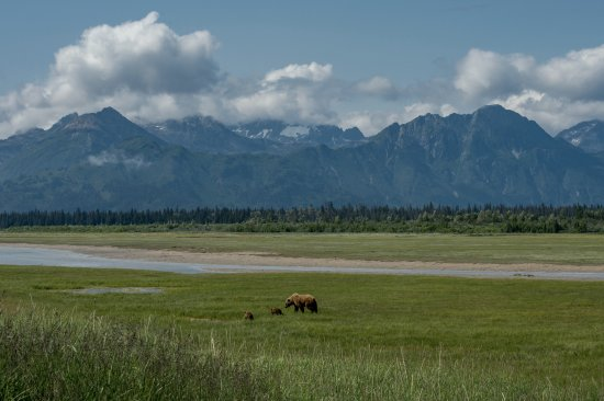 Sterling, AK: Mother and her cubs