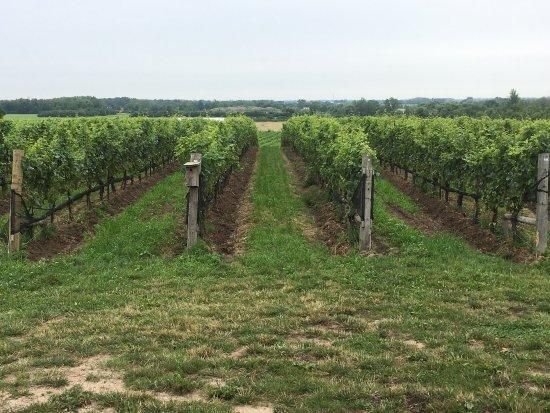 Ravine Vineyard Estate Winery: photo3.jpg