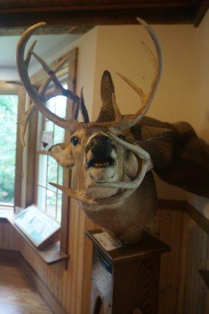 Mashomack Preserve: where the antlers got entangled