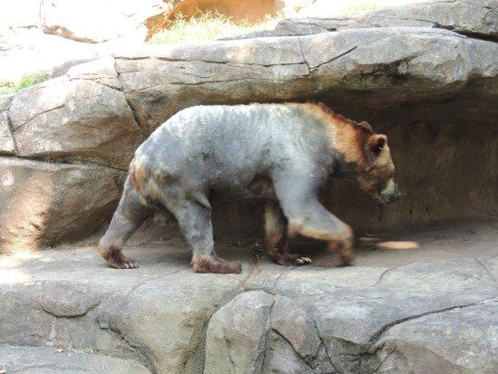 North Carolina Zoo Foto