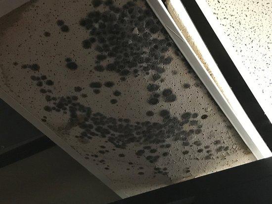 Lethbridge, Canadá: Huge puffy mold in Men's washroom! DISGUSTING & DANGEROUS!