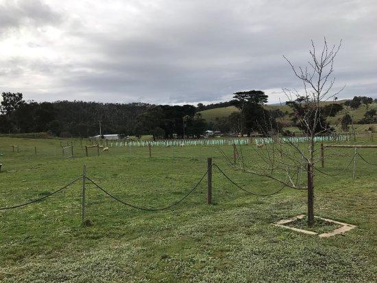 Yarra Glen, Australia: Yileena Park