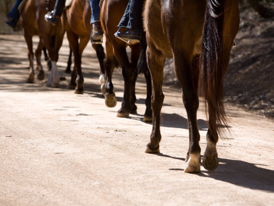 Capertee, Australia: horseriding is a fun activity
