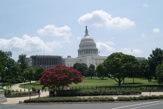 DC Tours: Going by the Capital Building, one of 18 stops.