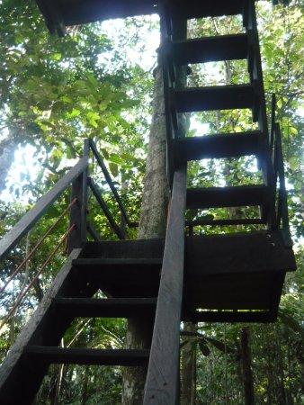 Reserva Natral Tanimboca Photo