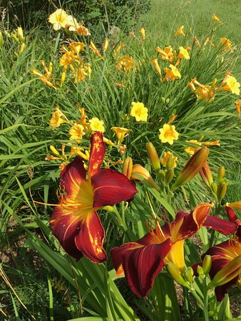 Milford, Canadá: Lillies of the Field