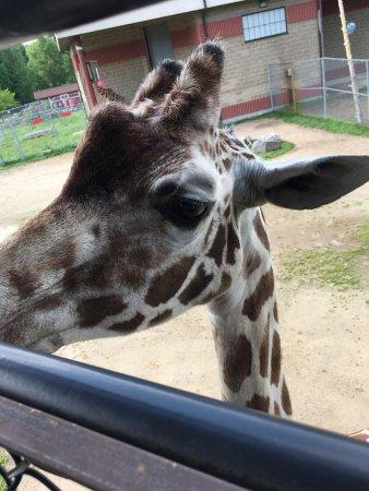 NEW Zoo & Adventure Park: photo0.jpg