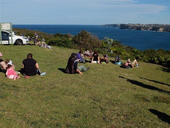 Manly, Avustralya: Nice slope for picnic besides car park