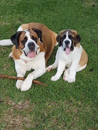 Tamborine Mountain, Australia: Molly & Syrah