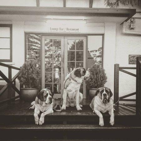 Tamborine Mountain, Australia: Molly, Syrah & Nelson