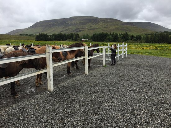 Mosfellsbaer, Island: Laxnes' corral at the ranch