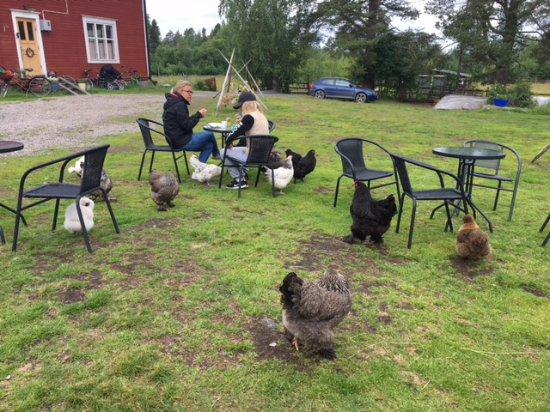 Mustasaari, ฟินแลนด์: Kahvilla kanojen kanssa