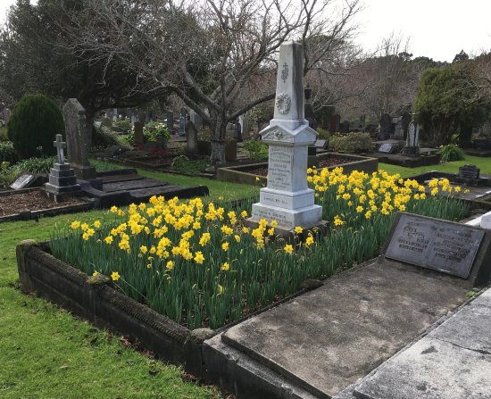 New Plymouth, New Zealand: te henui cemetery - daffodils 24 july 2017