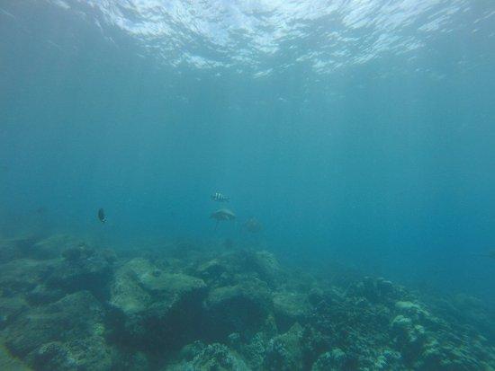 Koloa, HI: Many sea turtles to be seen!