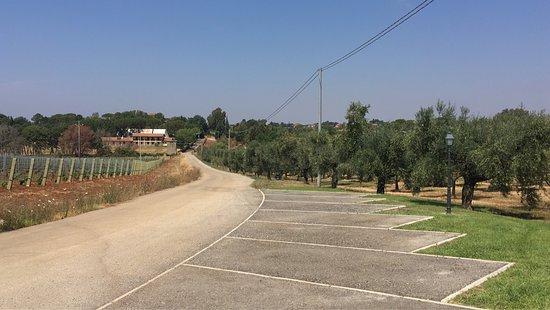 Lanuvio, إيطاليا: photo1.jpg