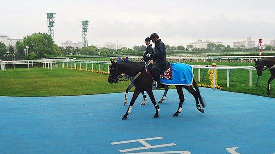 Hakodate Horse Racetrack : 誘導馬 エリモハリアー号
