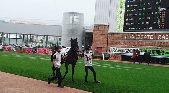 Hakodate Horse Racetrack : パドックで暴れるゴールドフラッグ号
