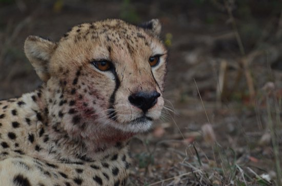 Phinda Private Game Reserve, Afrika Selatan: Just a few amazing pics