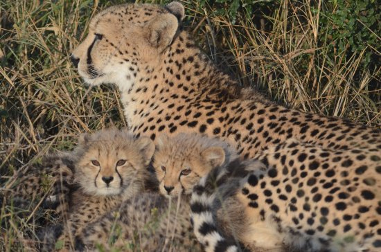 Phinda Private Game Reserve, South Africa: Just a few amazing pics