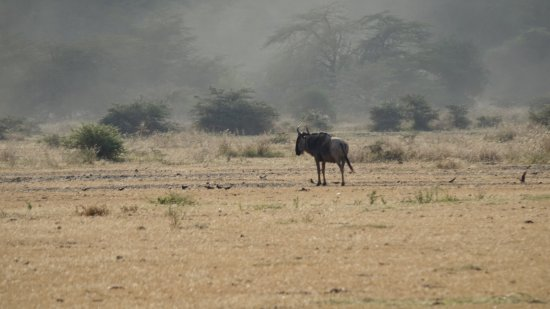 Lake Manyara National Park, Tanzania: photo0.jpg