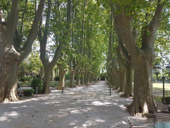 Le Chateau des Alpilles: The driveway