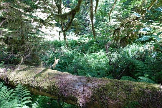 Port Alberni, Canada: Rain forest
