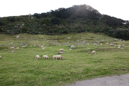Mount Maunganui, Selandia Baru: FB_IMG_1500893438160_large.jpg