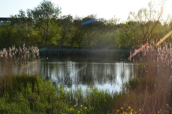Rye Meads Nature Reserve : Summer view from Ashby Hide