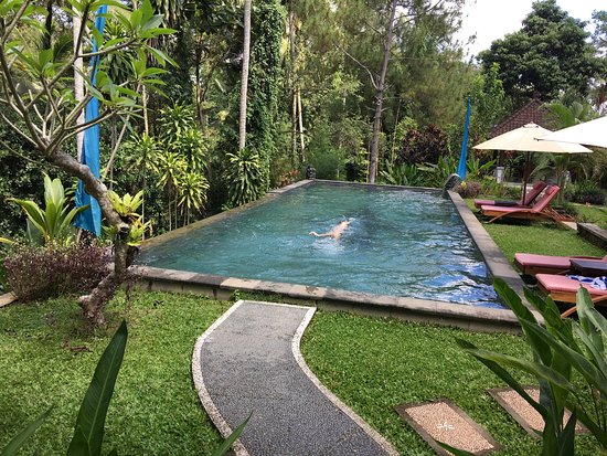 Suara Air Luxury Villa Ubud: photo0.jpg
