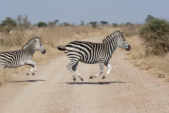 George, Sudafrica: Zebra crossing