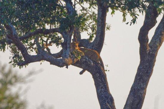 George, Sudáfrica: Rest in the tree